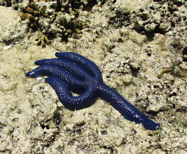 Blue Snake - Bing images